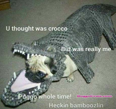 Watch Funny Doggo Images At Doggocrate