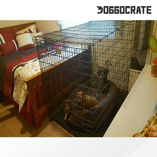 Midwest Ginormus Double Door 54 Inch Dog Crate Review 2018