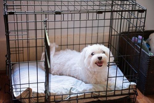 dog crate with dog