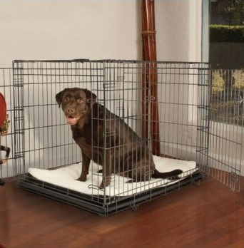 Petco Premium Dog Crate