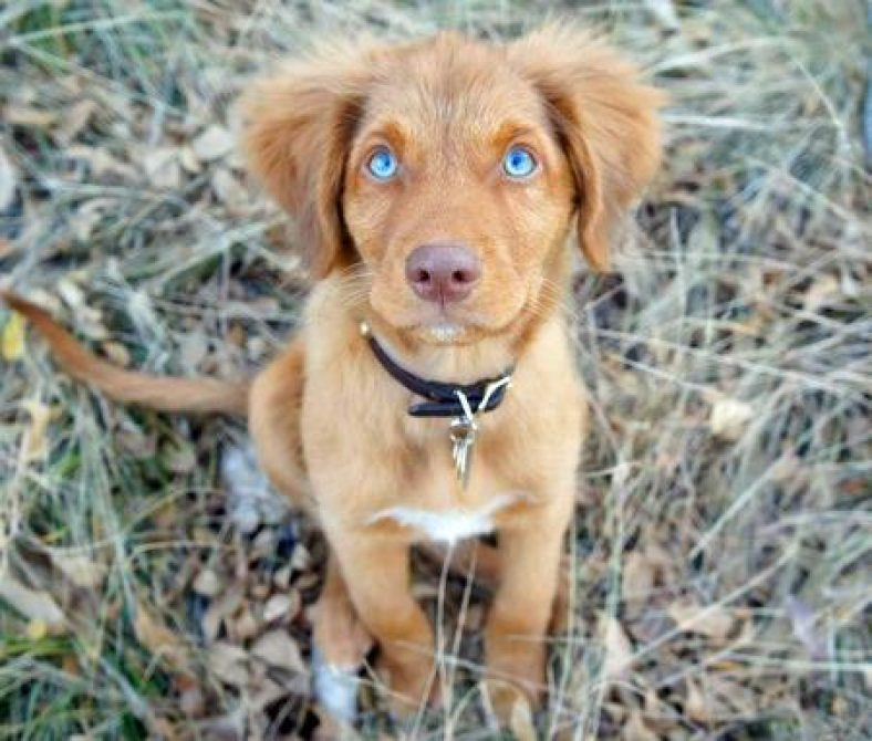 Blue Eyes In Dogs What Dogs Have Blue Eyes With