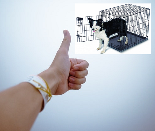 Benefits of Crate Training your dog properly