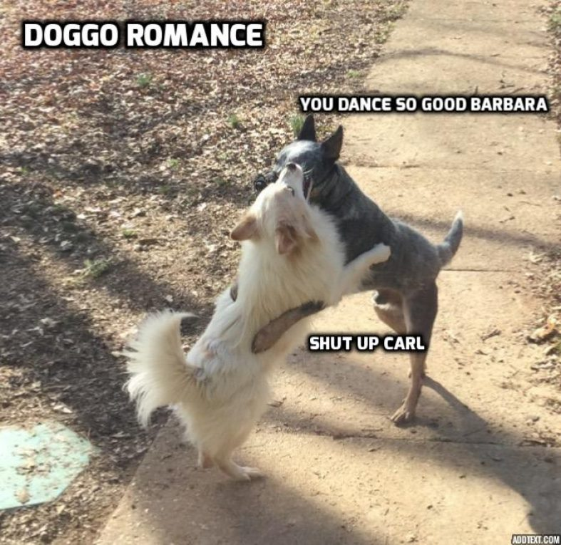 Watch Funny Doggo Images At Doggocrate